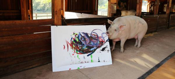 Pigcasso: una cerda pinta cuadros que se venden en galerías de arte