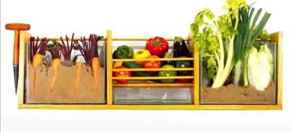 Dos emprendedores crearon un sistema de conservación de vegetales sin frío y ecofriendly